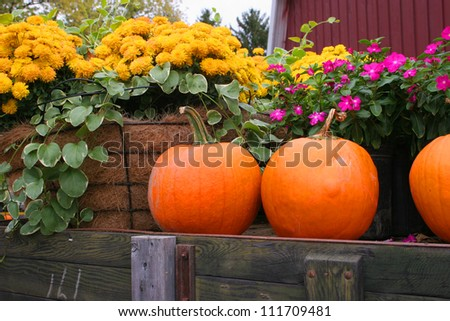 pumpkins and gourds at harvest time