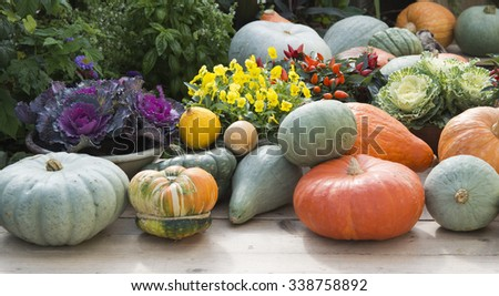 pumpkins and plants on gardentable in autumn #338758892