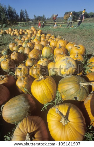 Pumpkins and scarecrows in VT