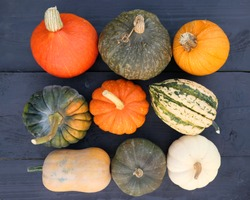 Pumpkins and squashes colorful autumn collection on wooden background.