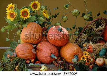 Pumpkins and sunflowers, harvest on Halloween