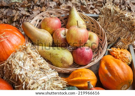 Pumpkins, apples, pears and straw on a wooden plate.