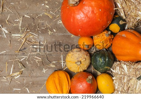 Pumpkins, apples, pears, tomatoes and straw on a wooden plate.