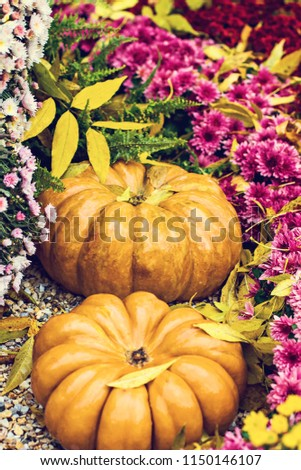 Pumpkins. Autumn decoration of the garden, autumn decor. Pumpkins and autumn flowers. Halloween, Thanksgiving, decoration of the house and garden for the holiday. #1150146107