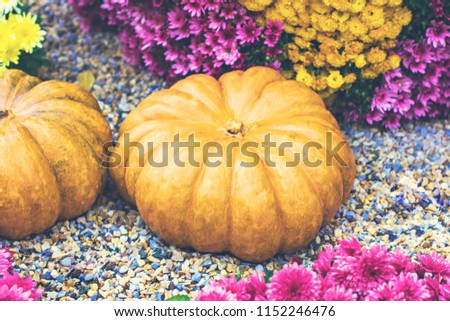 Pumpkins. Autumn decoration of the garden, autumn decor. Pumpkins and autumn flowers. Halloween, Thanksgiving, decoration of the house and garden for the holiday. #1152246476