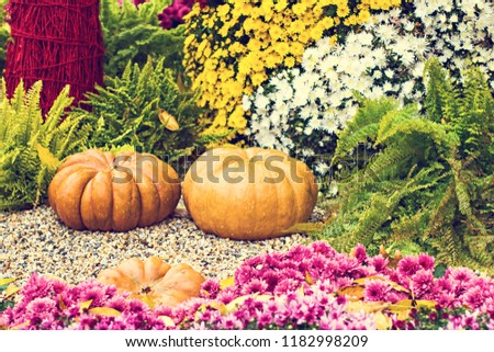 Pumpkins. Autumn decoration of the garden, autumn decor. Pumpkins and autumn flowers. Halloween, Thanksgiving, decoration of the house and garden for the holiday. #1182998209