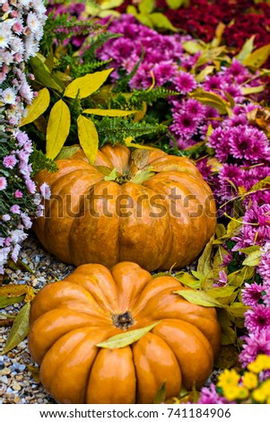 Pumpkins. Autumn decoration of the garden, autumn decor. Pumpkins and autumn flowers. Halloween, Thanksgiving, decoration of the house and garden for the holiday. #741184906