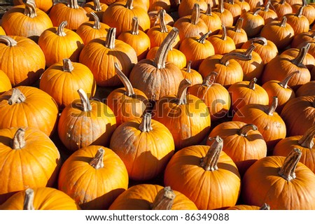 Pumpkins bunched together on a Vermont farm stand