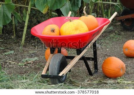 Pumpkins displayed outdoors for the halloween season. #378577018
