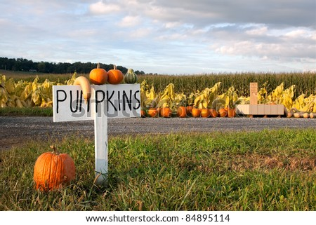 Pumpkins for sale along a rural road in Lancaster County,Pennsylvania