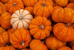 Pumpkins for sale in autumn at a local farmers market in autumn