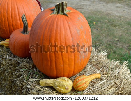 pumpkins, gourds and hay bales  #1200371212
