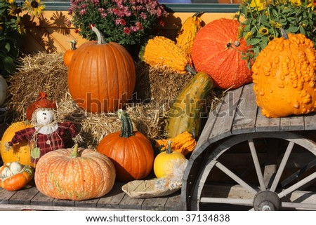 pumpkins gourds and scarecrow on wooden wagon - stock photo