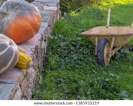 Pumpkins in a stone wall and a pushcart in a farm