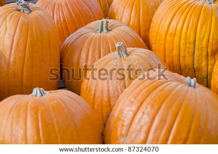 Pumpkins in an Open Air Market