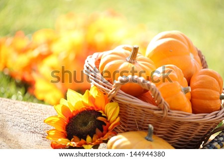 Pumpkins in basket and decorative corns. Defocused colorful leaves in the background