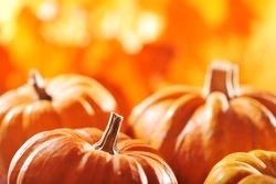 pumpkins in front of highlighted orange oak leaves
