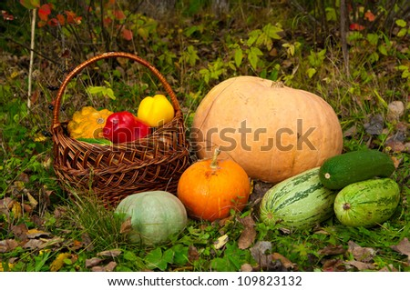 pumpkins, marrows and other vegetables lying on the grass