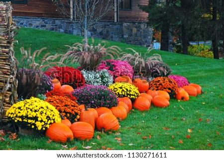 Pumpkins, mums and corn stalks create a delightful autumn display in New England #1130271611