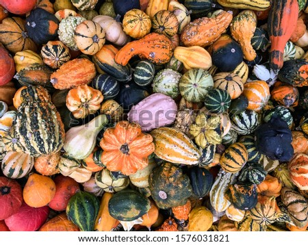 pumpkins of different varieties are in the box