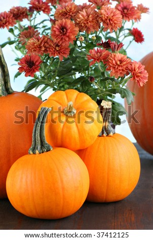 Pumpkins of various sizes in front of a fall colored bouquet of mums against a cloudy blue sky. #37412125