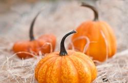 Pumpkins on hey, closeup