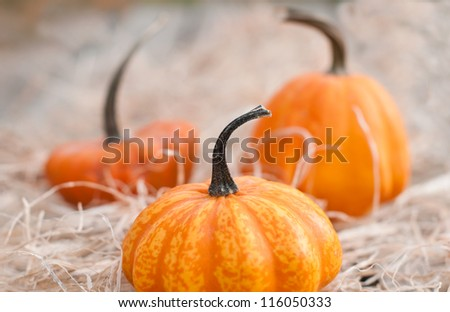 Pumpkins on hey, closeup