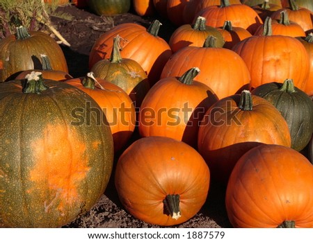 Pumpkins on market place at Half Moon Bay
