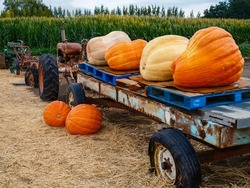 Pumpkins on old tractor and trailer