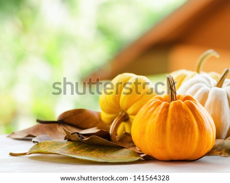 Pumpkins on rural landscape background. #141564328