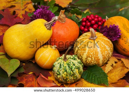 Pumpkins on the background with  autumn  leaves  #499028650