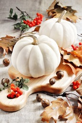 Pumpkins or white gourds, autumn, fall decoration for Thanksgiving or Halloween, selective focus