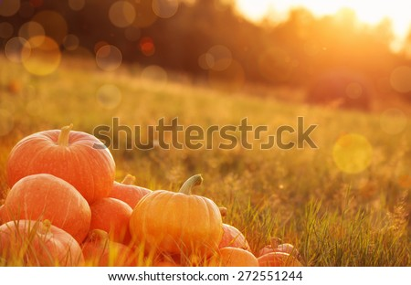 pumpkins outdoor #272551244