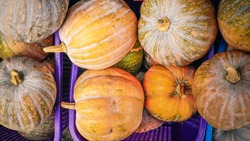 pumpkins sell in the local market