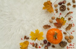 Pumpkins, walnuts, chestnuts, acorns, cones and rosehips. Autumn flat lay composition on warm, cosy, white winter blanket, with copy space.
