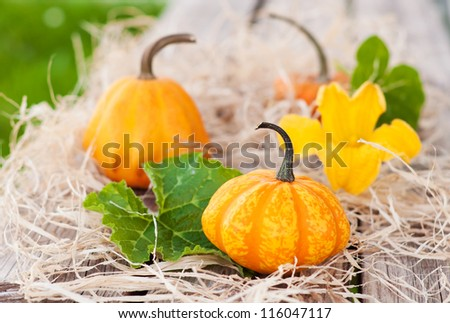 Pumpkins with leaves and a flower on hay