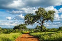 Punda Maria in North of Kruger national park