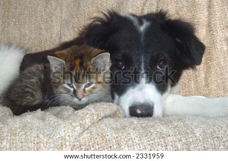pup and kitty head to head