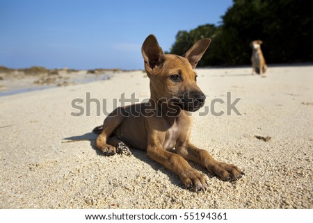 Pup on the beach