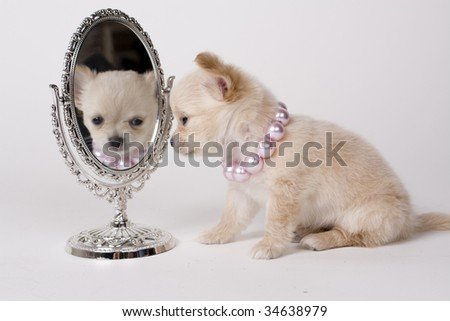 pup with mirror
