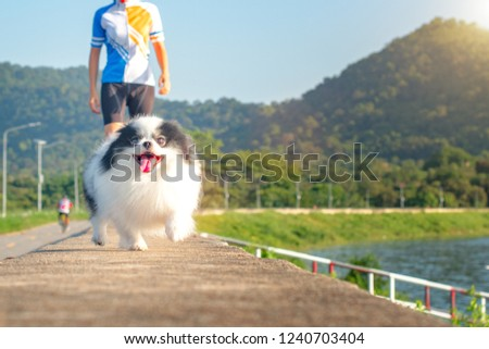 Pupper dof running away from the owner, escape away freedom in self-indulgent, running follow to catch up