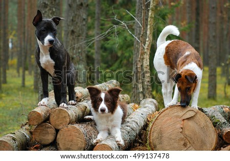 Puppies #499137478