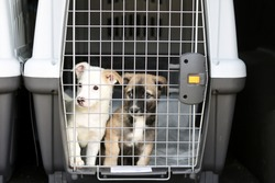 puppies in a container for transporting animals. travel with animals