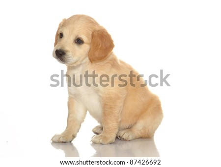 puppies isolated white background