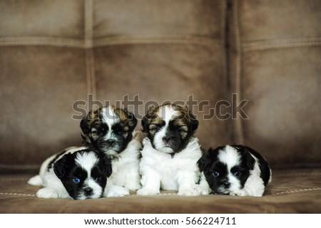puppies 1 month