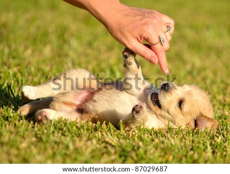Puppies playing in grass
