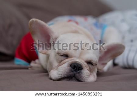 Puppies, white bulldogs, cute bulldogs #1450853291