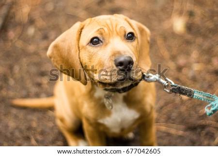 Puppy #677042605