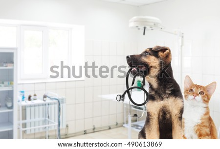 Puppy and kitten and a stethoscope in the veterinary clinic