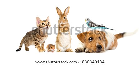 puppy and kitten and parrot and rabbit and hamster on a white background